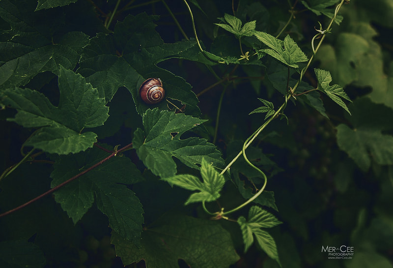Photograph Lonely Snail by MerCee Photography on 500px