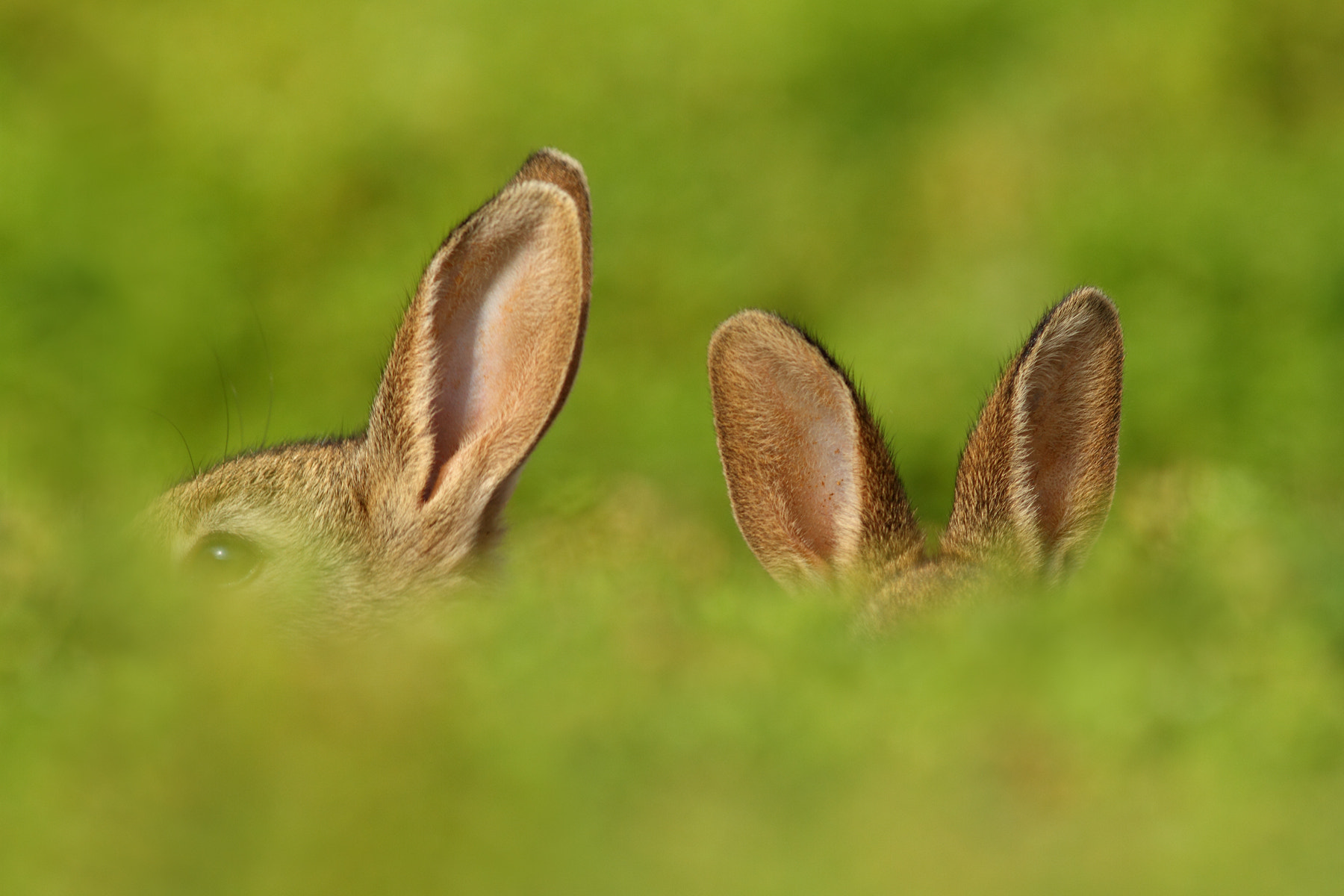 Photograph Young Rabbits by Simon Roy on 500px