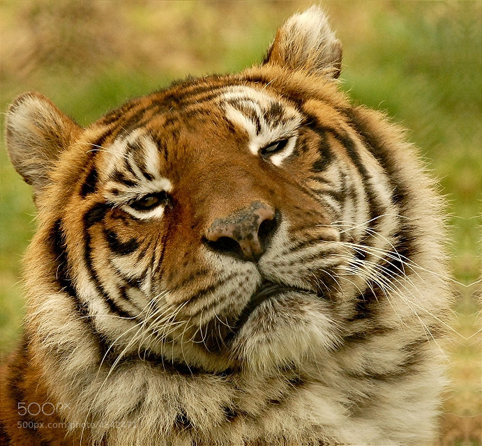 Photograph I'm bored ! by John Robinson on 500px