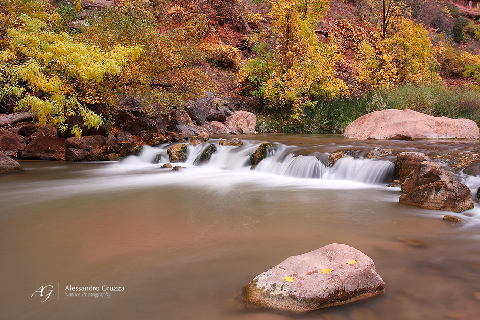 Photograph Virgin River in autumn dress by Alessandro Gruzza on 500px