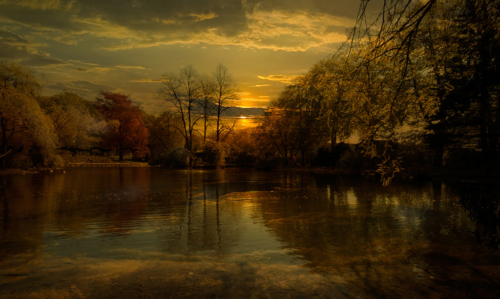 Photograph The Park by Terje Nicolaysen on 500px