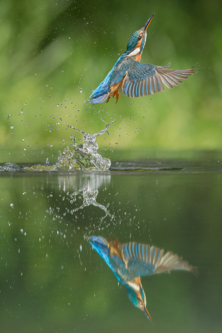 Photograph Kingfisher by Andy Astbury on 500px