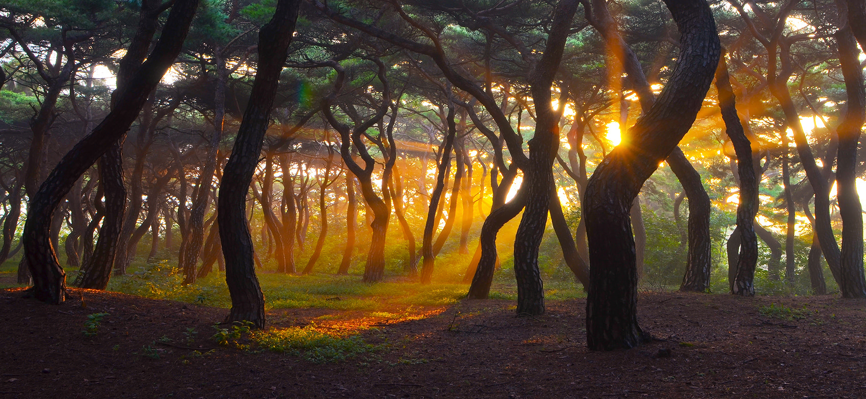 Photograph Forest by Chigun Nam on 500px