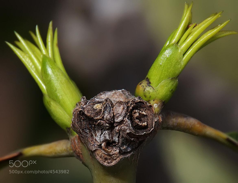 Photograph Gremlin by Shimon Gabai on 500px