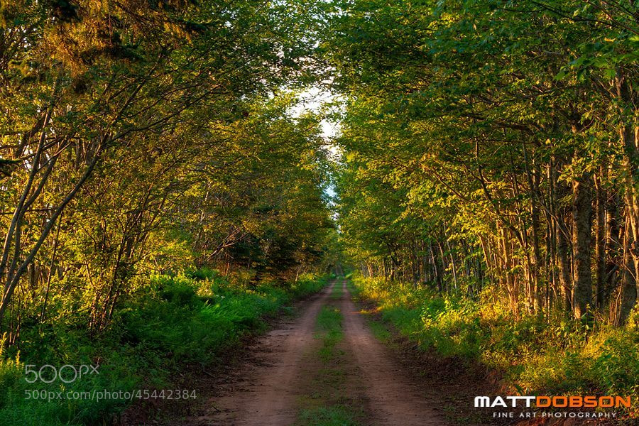 Photograph The Road Less Travelled by Matt Dobson on 500px