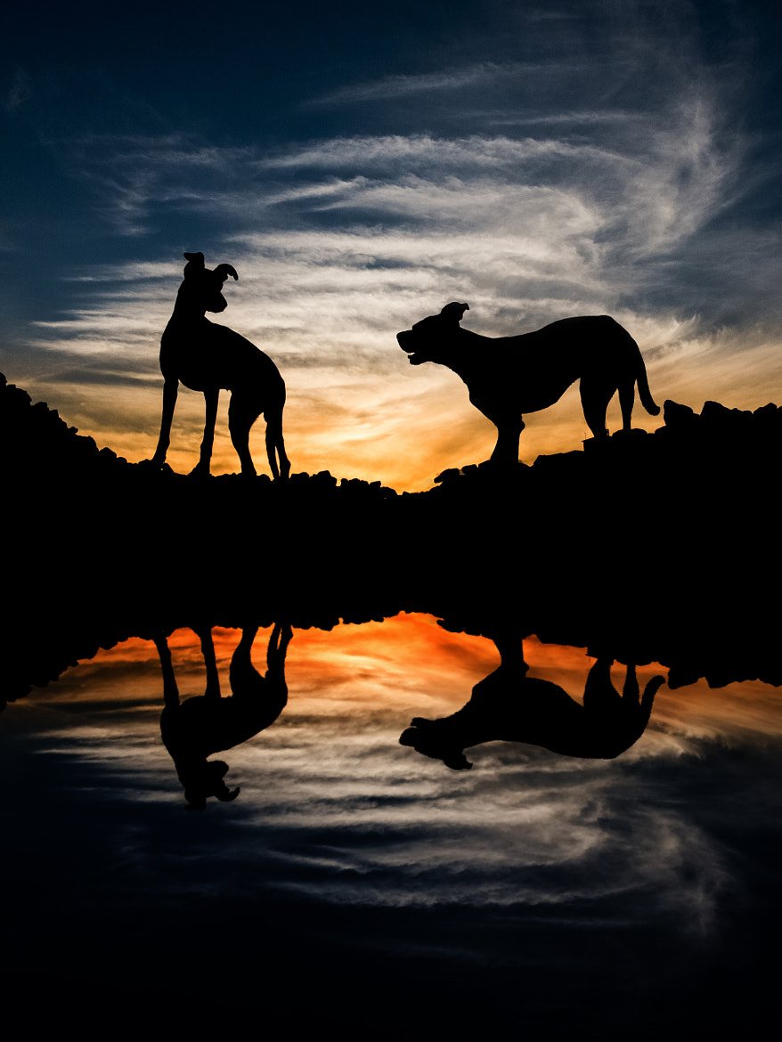 Photograph East of Kansas II by Elke Vogelsang on 500px