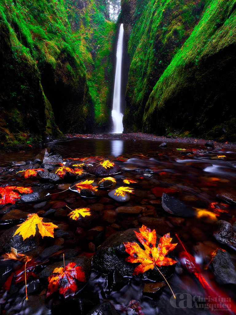 Photograph Fall at Oneonta by Christina Angquico on 500px