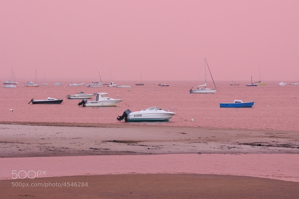 Photograph Life in Pink by  Seto Naikai on 500px