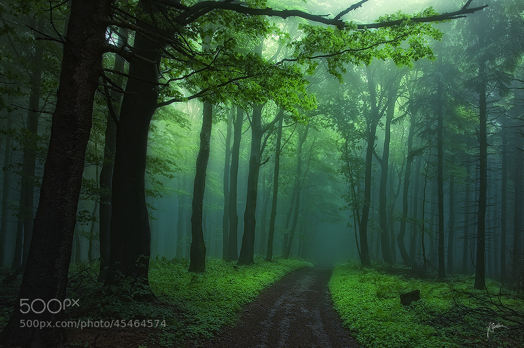 Photograph Secrecy of transformation by Janek Sedlar on 500px