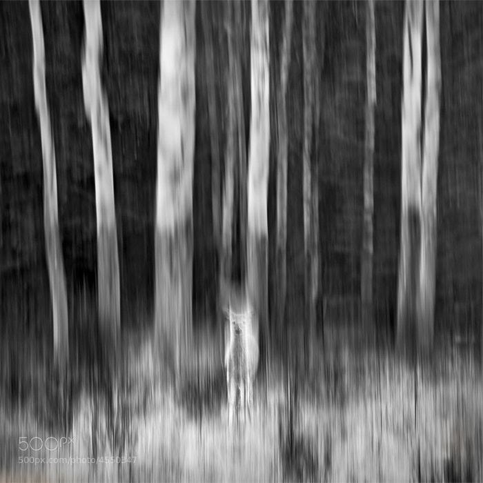 Photograph Frame of Mind by Luke Austin on 500px