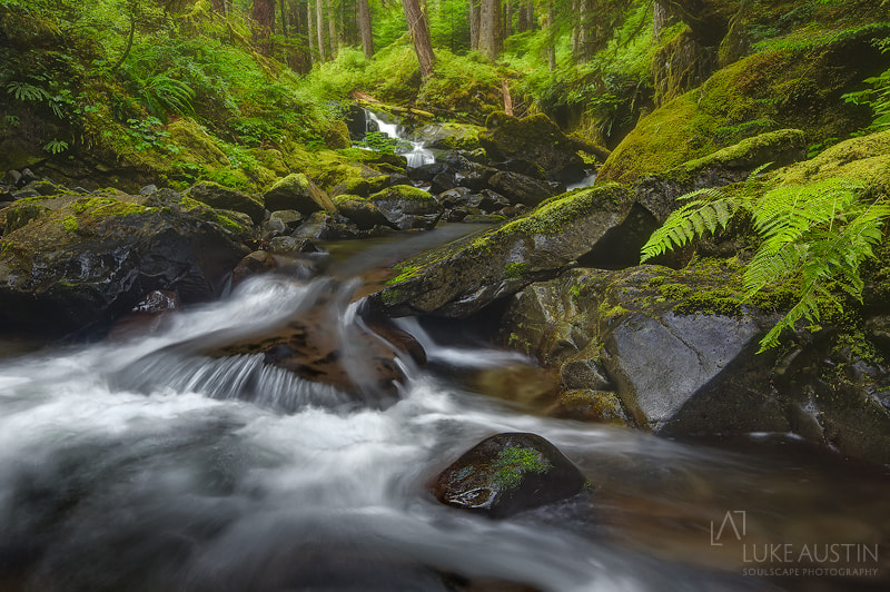 Photograph Sol Duc Valley - Olympic National Park-Washington by Luke Austin on 500px