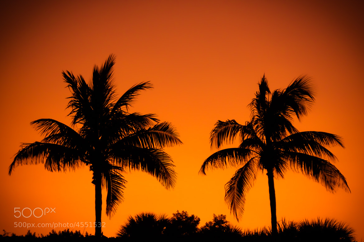 Photograph Palm Tree by Norbert Weiss on 500px