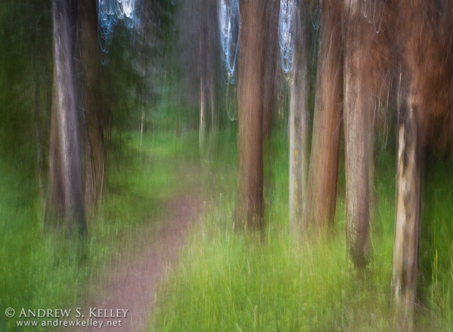 Photograph Forest Path by Andrew Kelley on 500px
