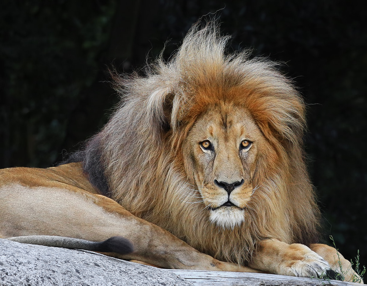 Photograph Bad hair day by Klaus Wiese on 500px