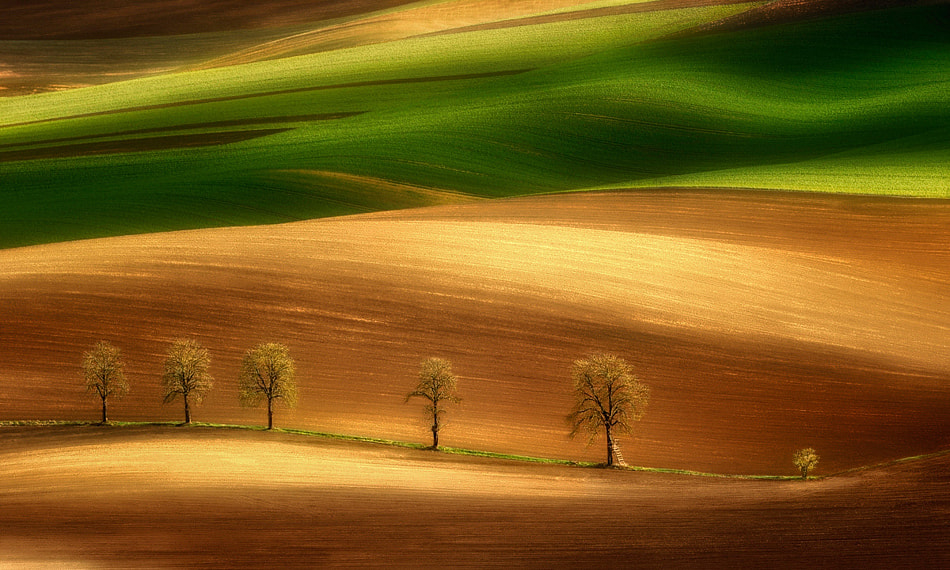 Photograph On the field`s appeal by Pawel Kucharski on 500px