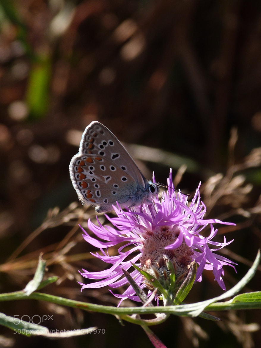 Photograph Butterfly on purple flower by Florence Guichard on 500px