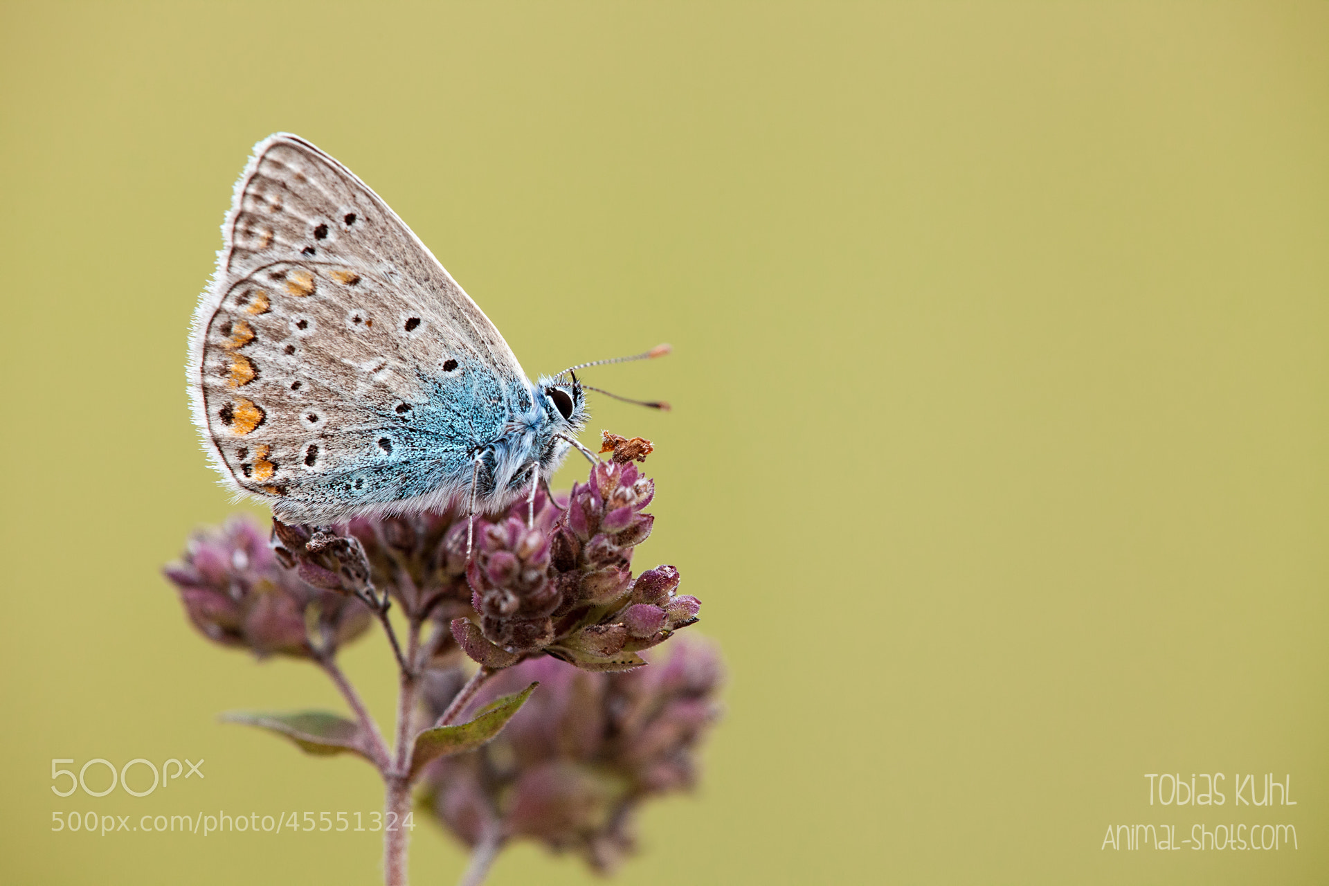 Photograph Simplicity by Tobias Kuhl on 500px