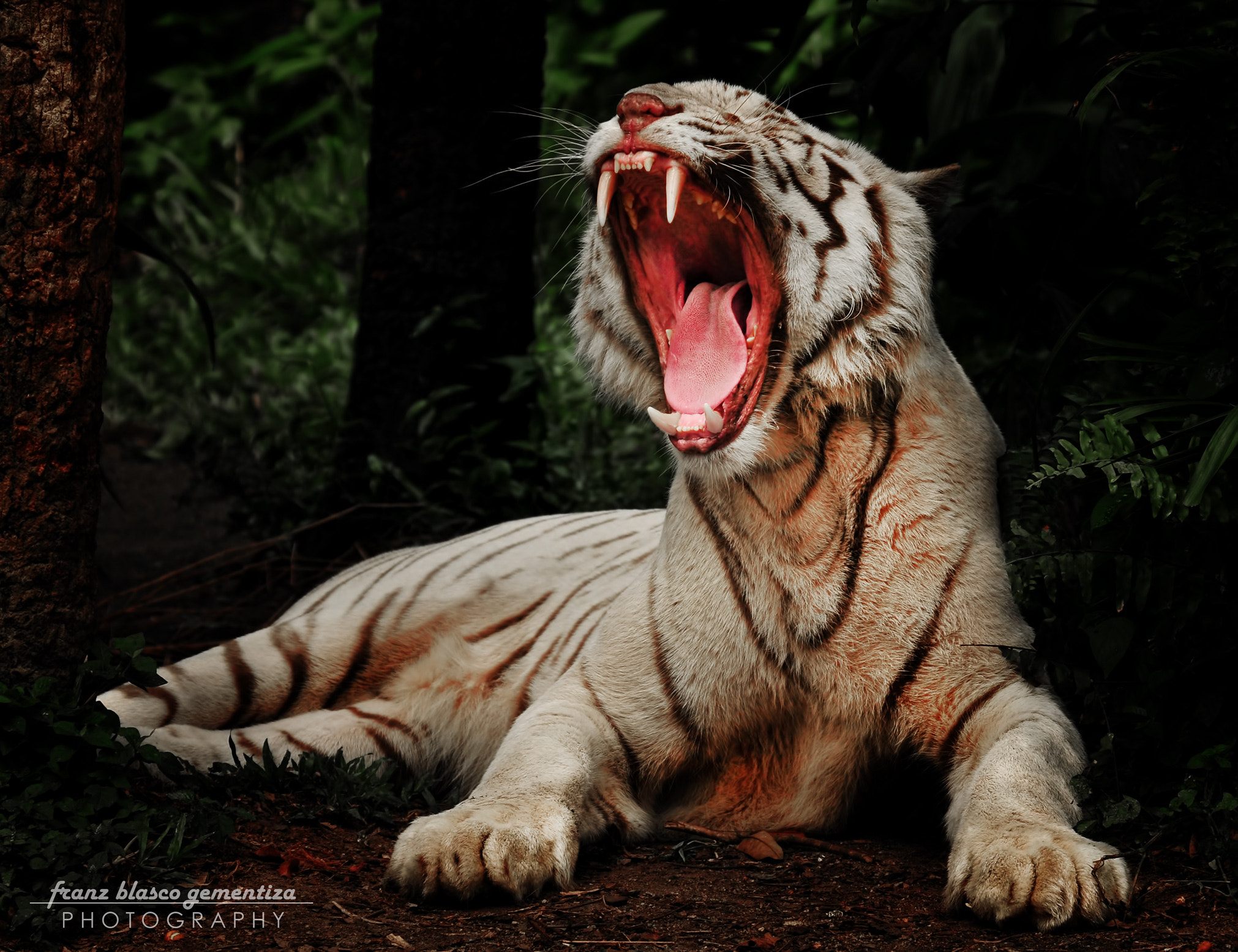 Photograph 1-800-FANGS by Franz Gementiza on 500px