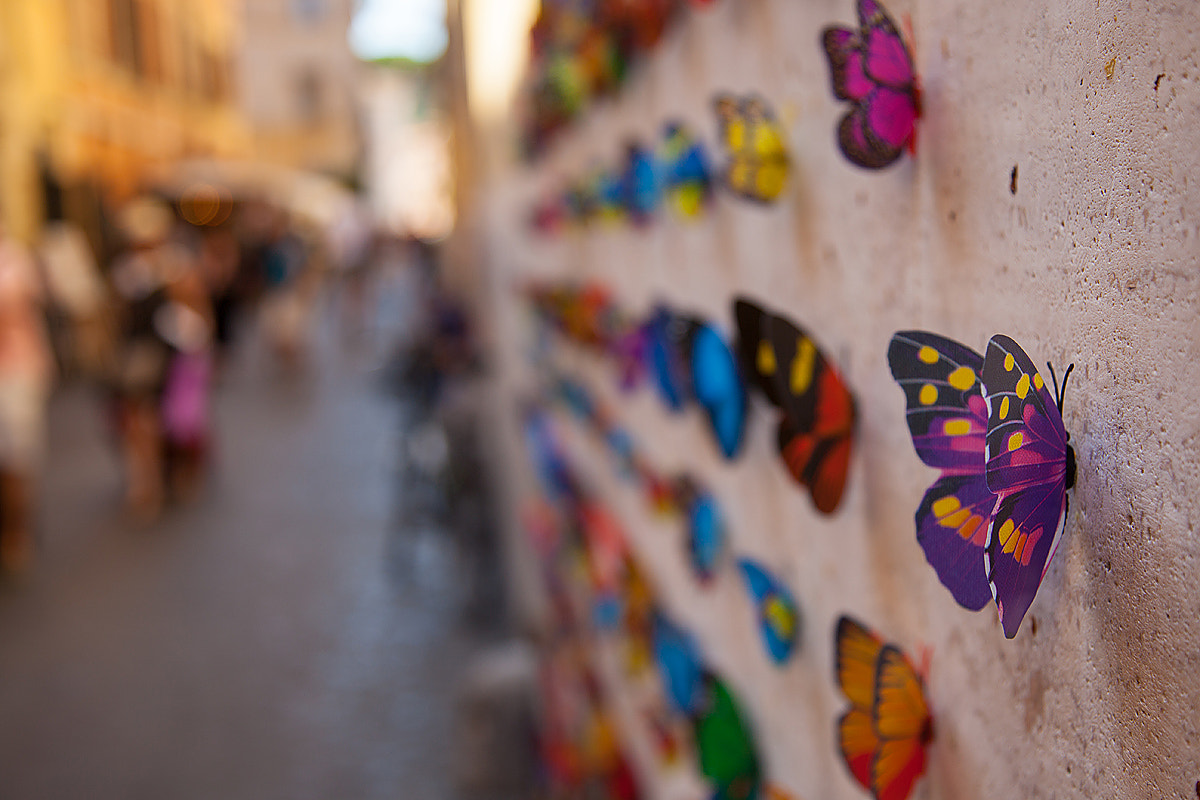 Photograph butterflies towns by Antonio Torkio on 500px