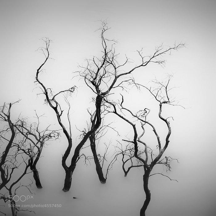 Photograph Sparse Trees by Hengki Koentjoro on 500px