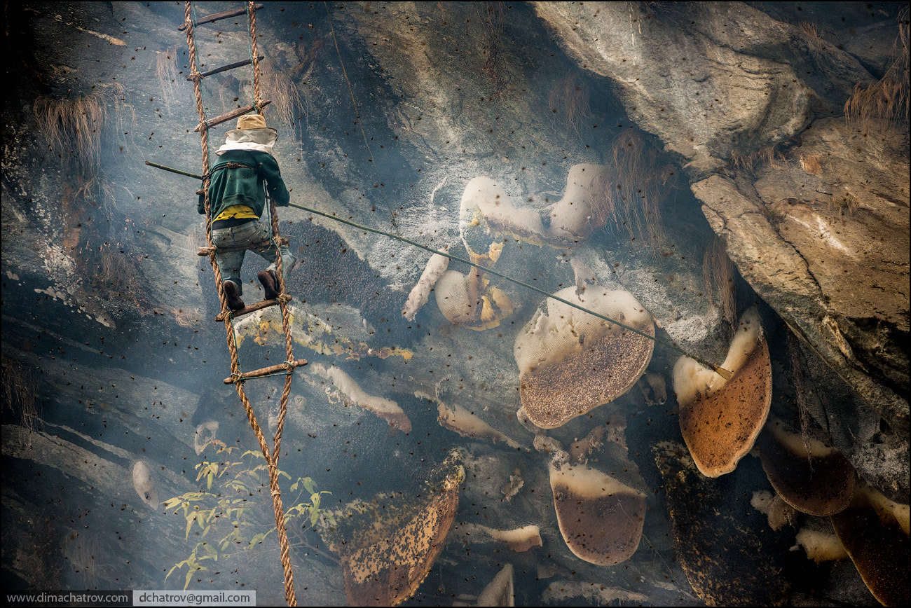 Photograph Honey Hunter at work by Dima Chatrov on 500px
