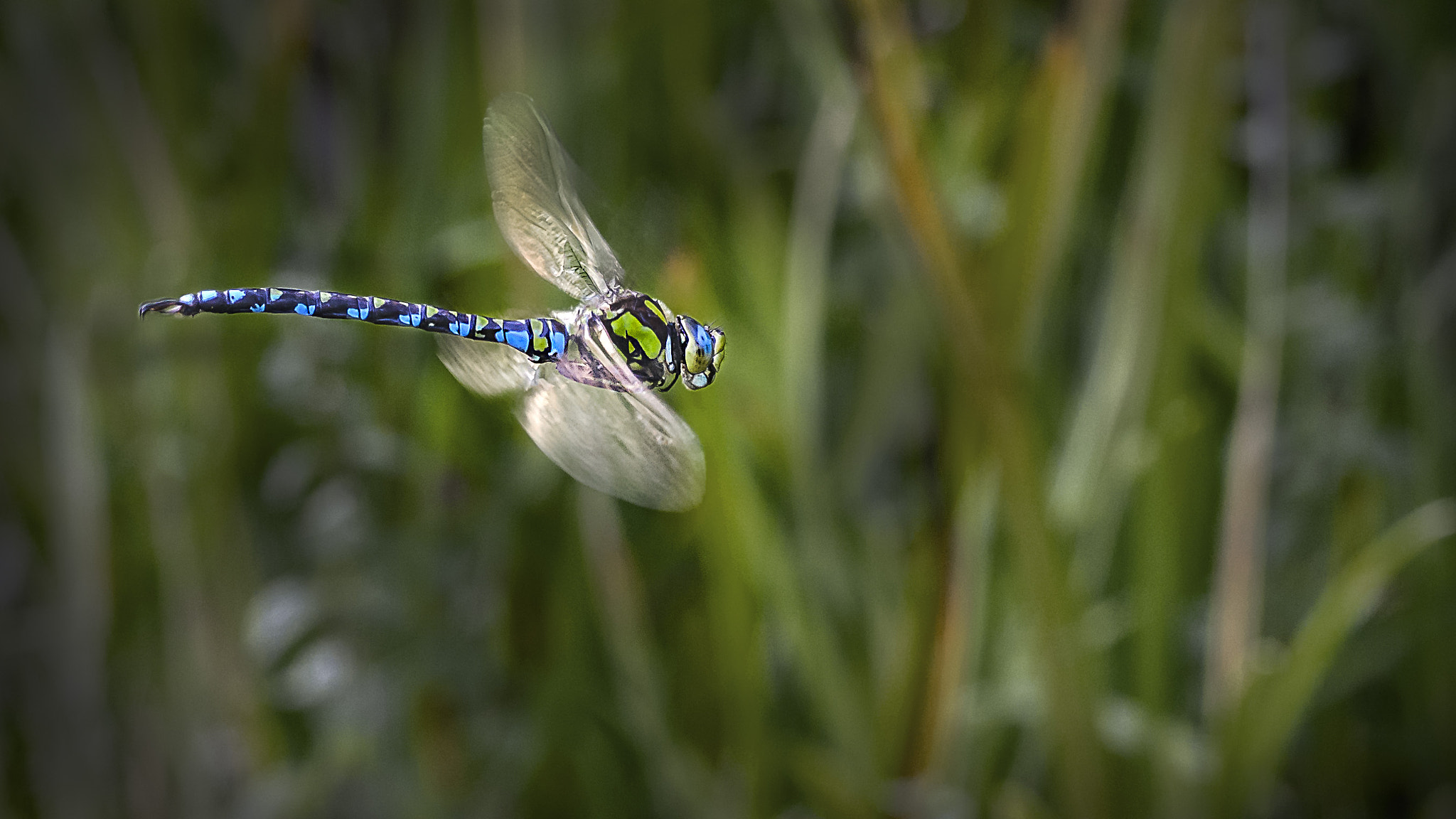 Photograph Flying Dragonfly by Mark Shoesmith on 500px