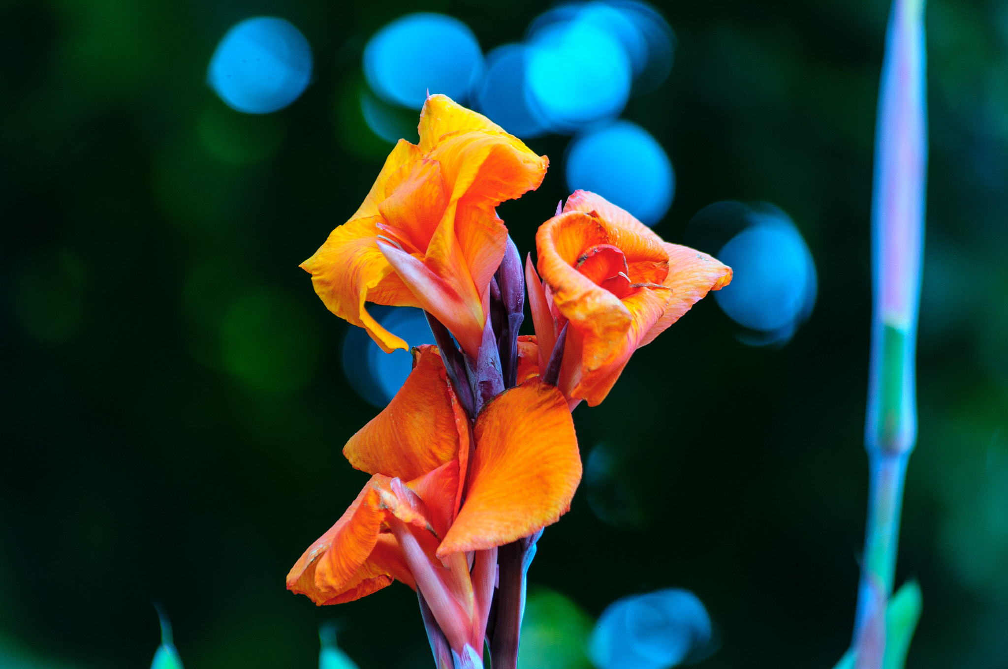 Photograph Orange You Beautiful by Christopher Ryan on 500px