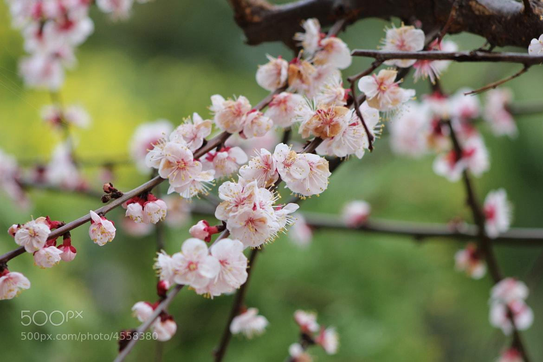 Photograph primavera by Fanny Sanchez on 500px