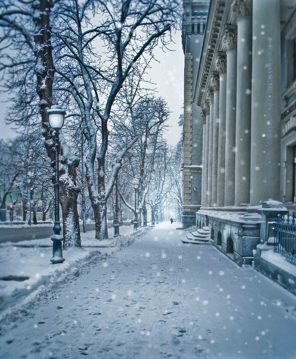 Photograph Winter walk II by Inna Petrova on 500px