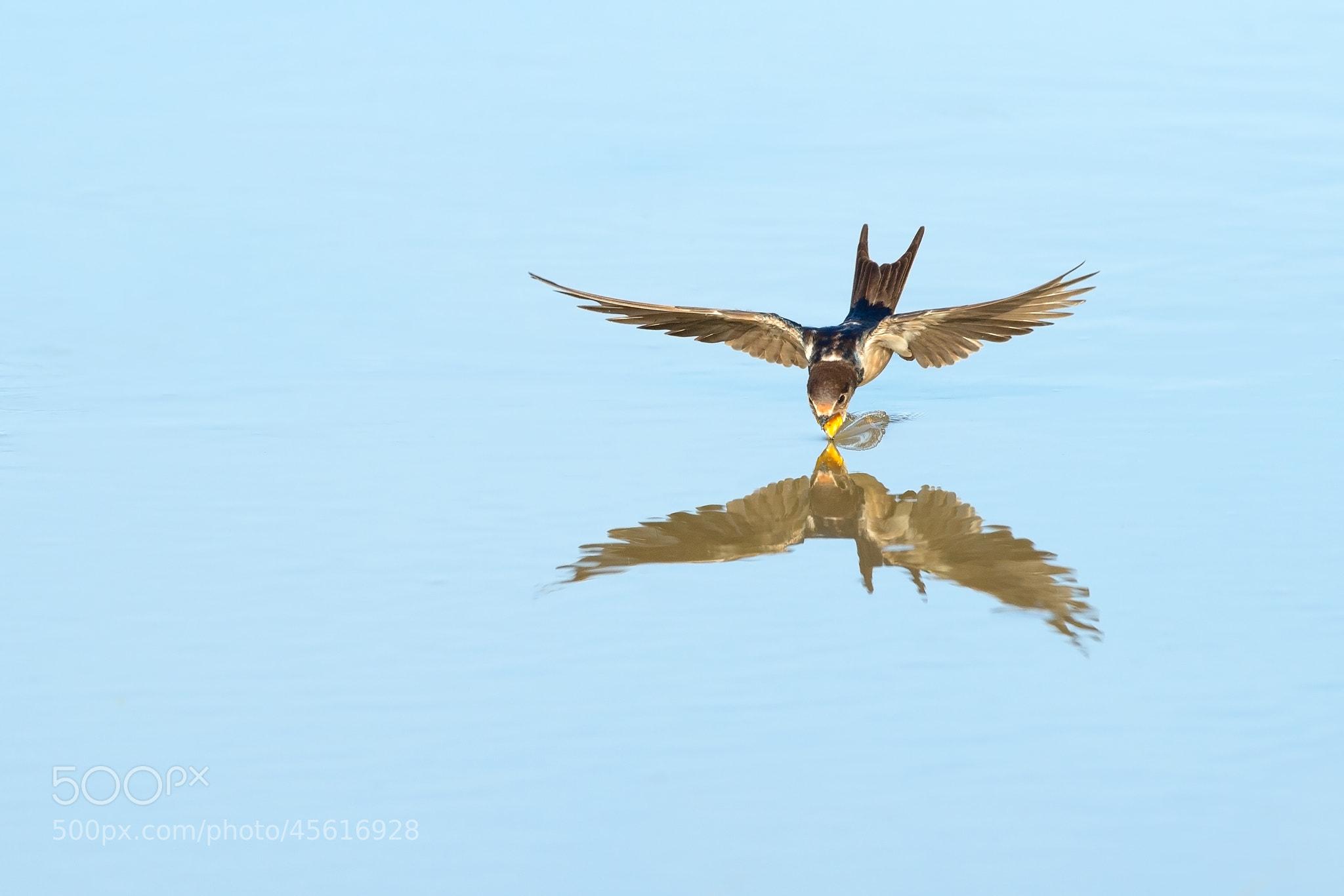 Photograph Thirsty by Johann Grobbelaar on 500px
