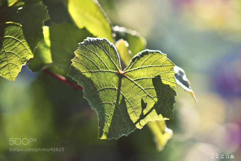 Photograph Grape bokeh by Julia Iva on 500px