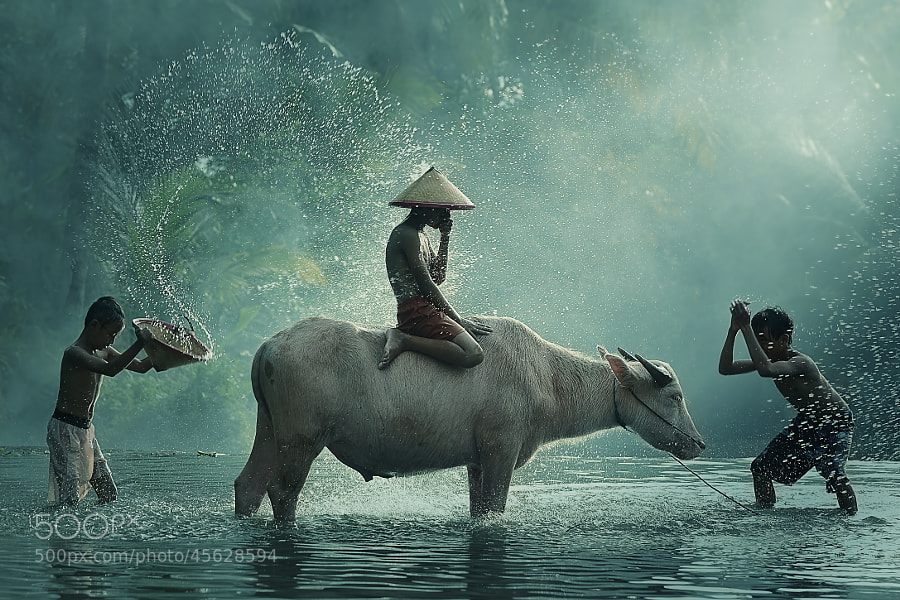 Photograph Water Buffalo....cool version by Vichaya Pop on 500px