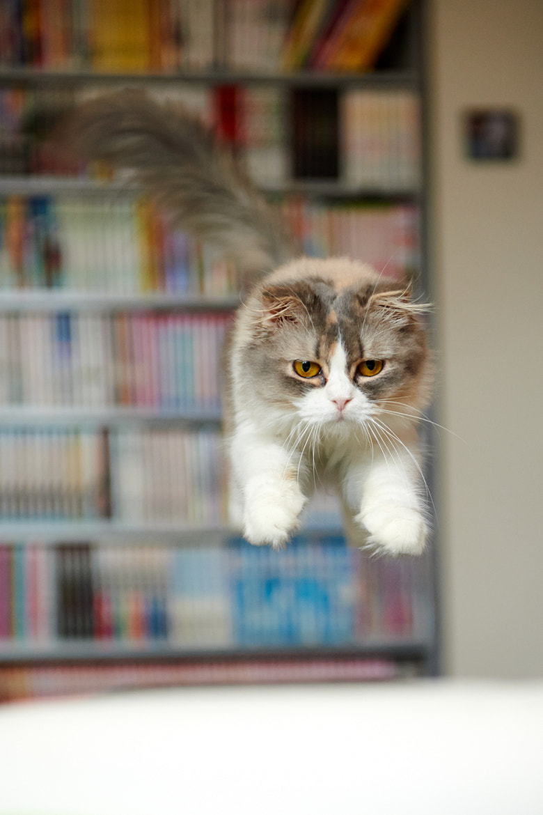 Photograph Leaping by Akimasa Harada on 500px