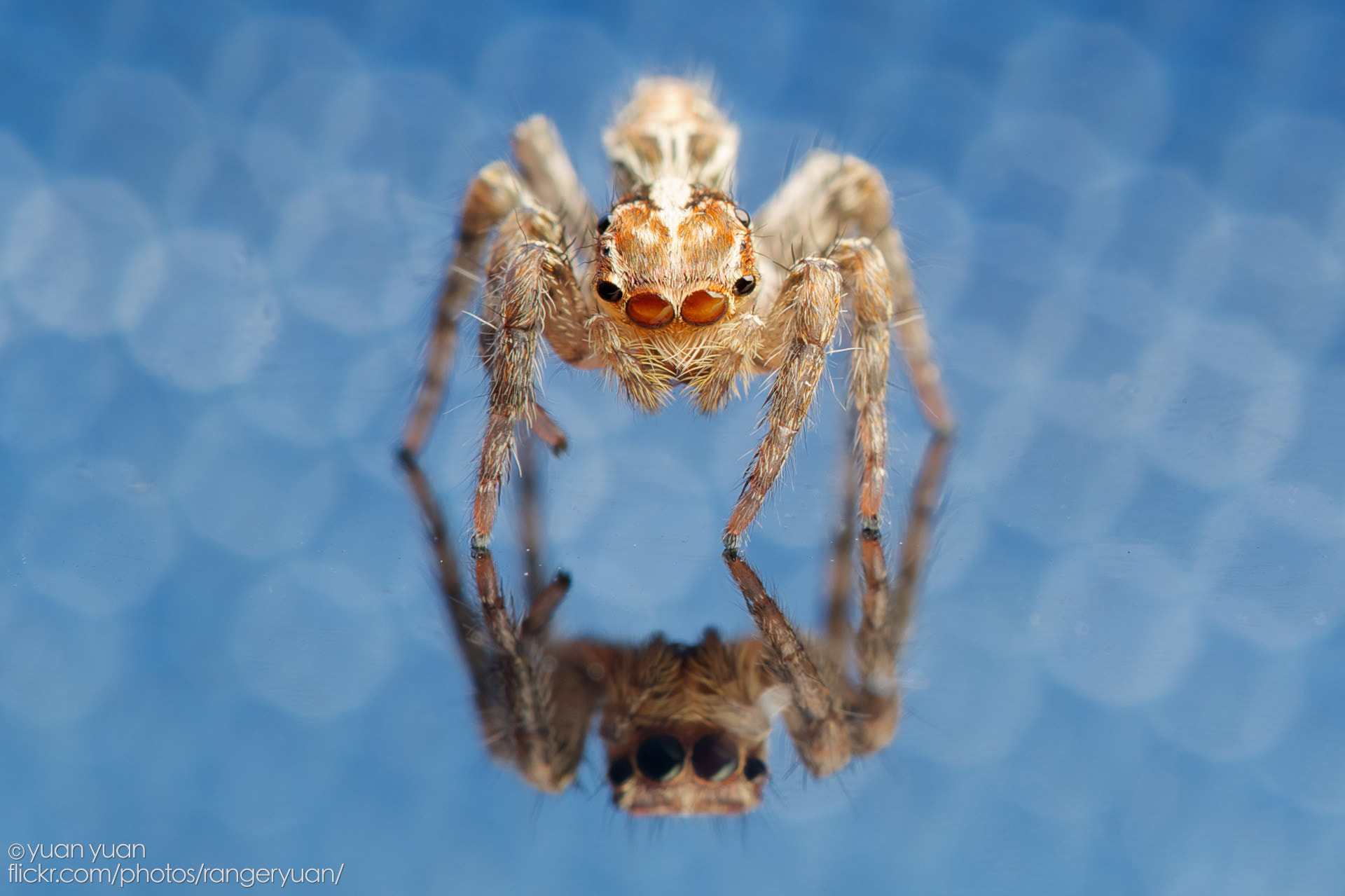 Photograph spider in table by yuan yuan on 500px