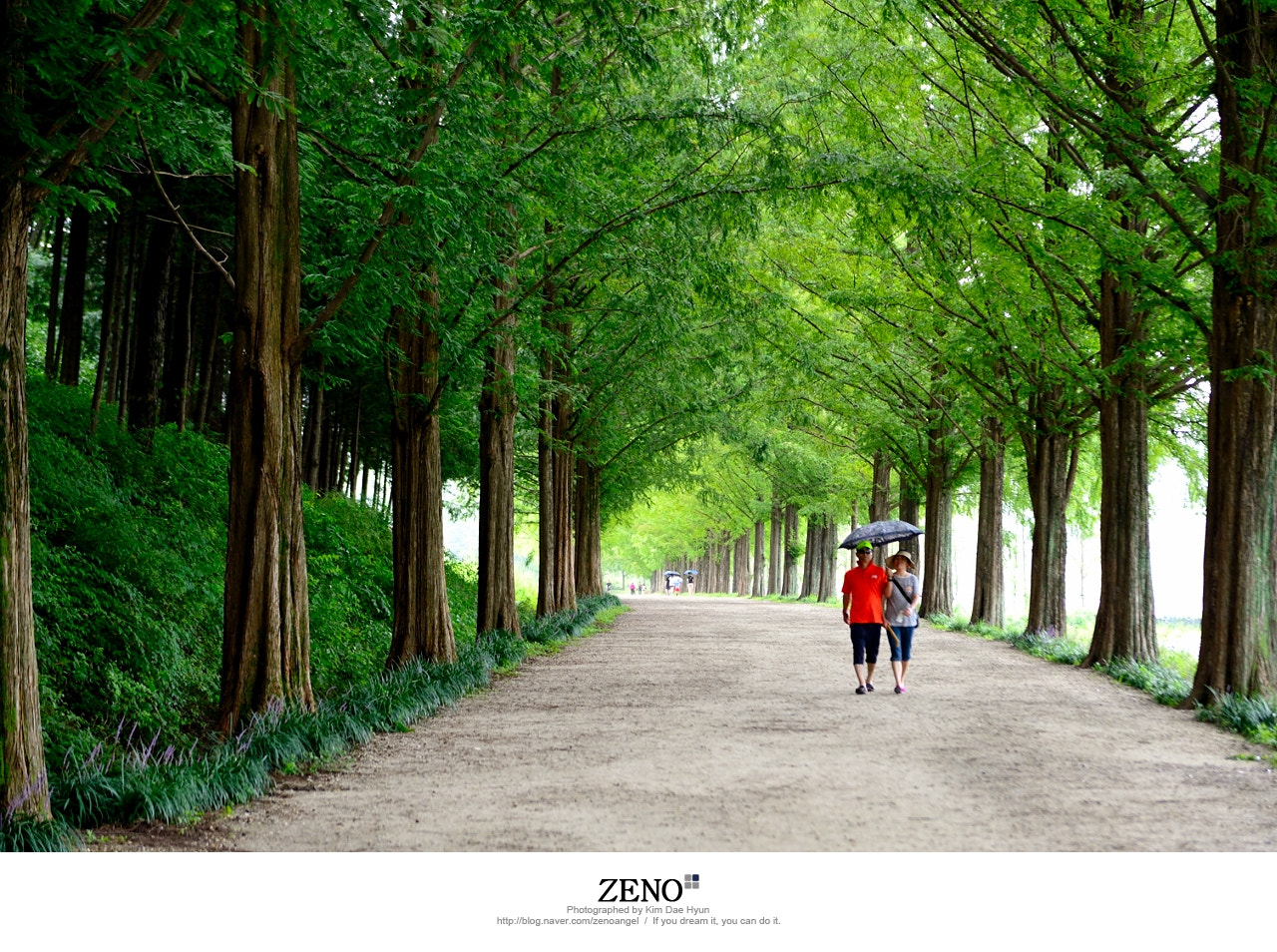 Photograph Metasequoia Road in Damyang by Kim DaeHyun on 500px