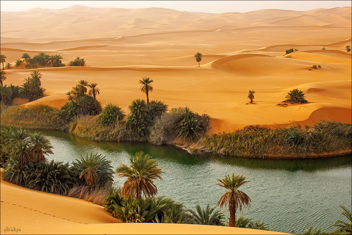 Photograph Oasis by Anna Gibiskys on 500px