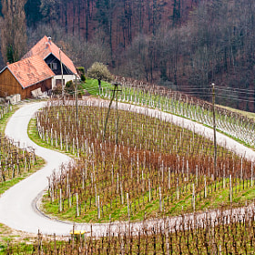 I Love Wine! by Hans Kruse (hanskrusephotography)) on 500px.com