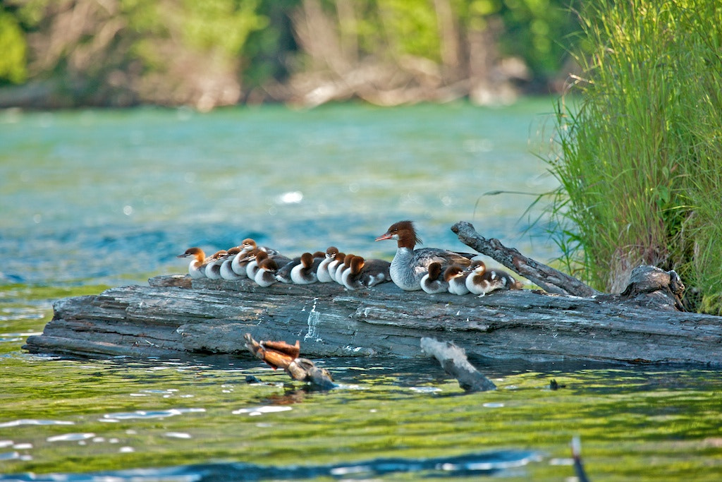 Photograph Big Family by Buck Shreck on 500px
