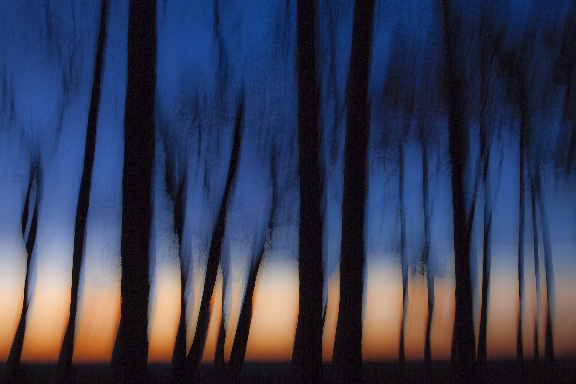 Photograph Trees silhouetted against the morning sky. by Jerry Monkman on 500px