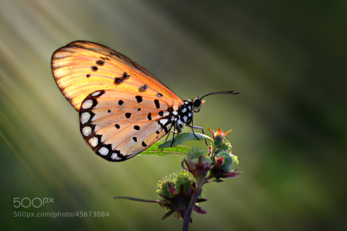 Photograph Back Light by Yudy Sauw on 500px