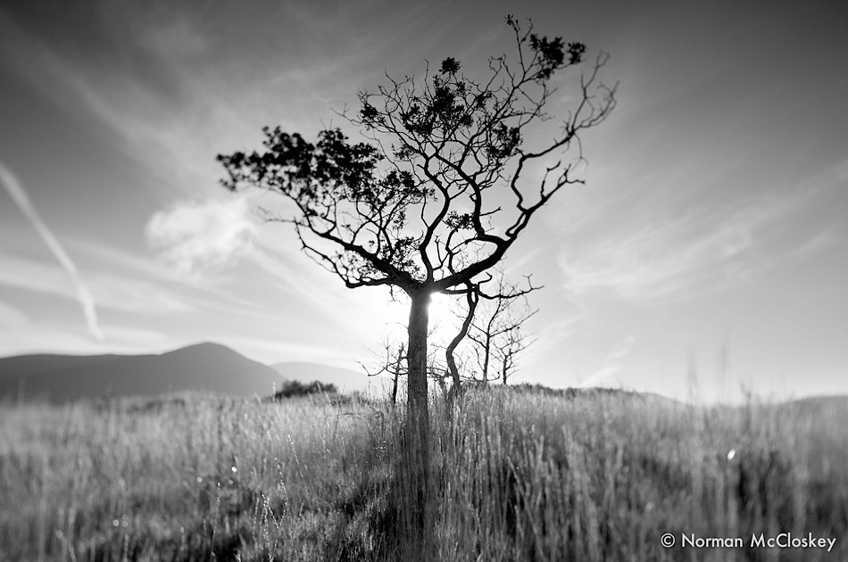Photograph Tree by norman mccloskey on 500px