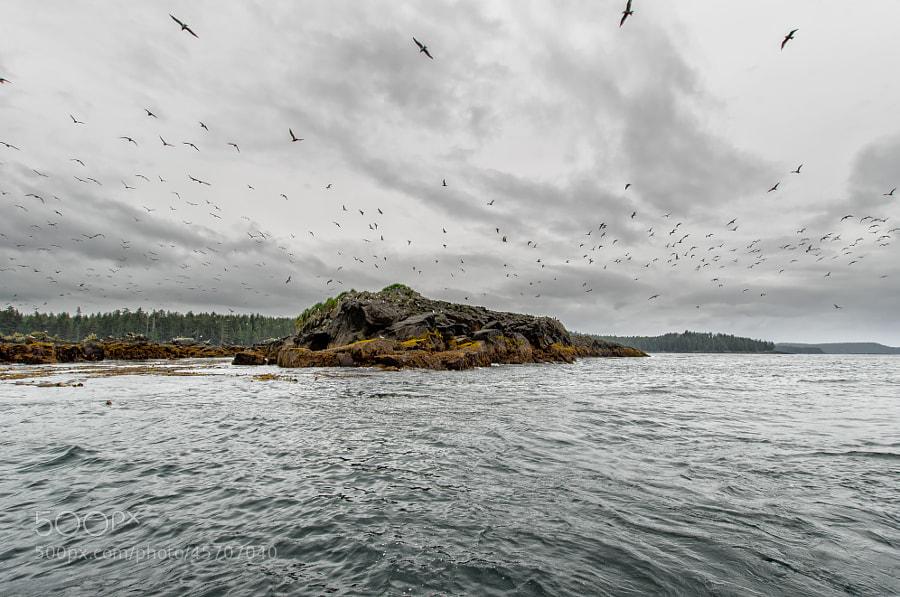 Photograph Bird Rock by Jason Drury on 500px