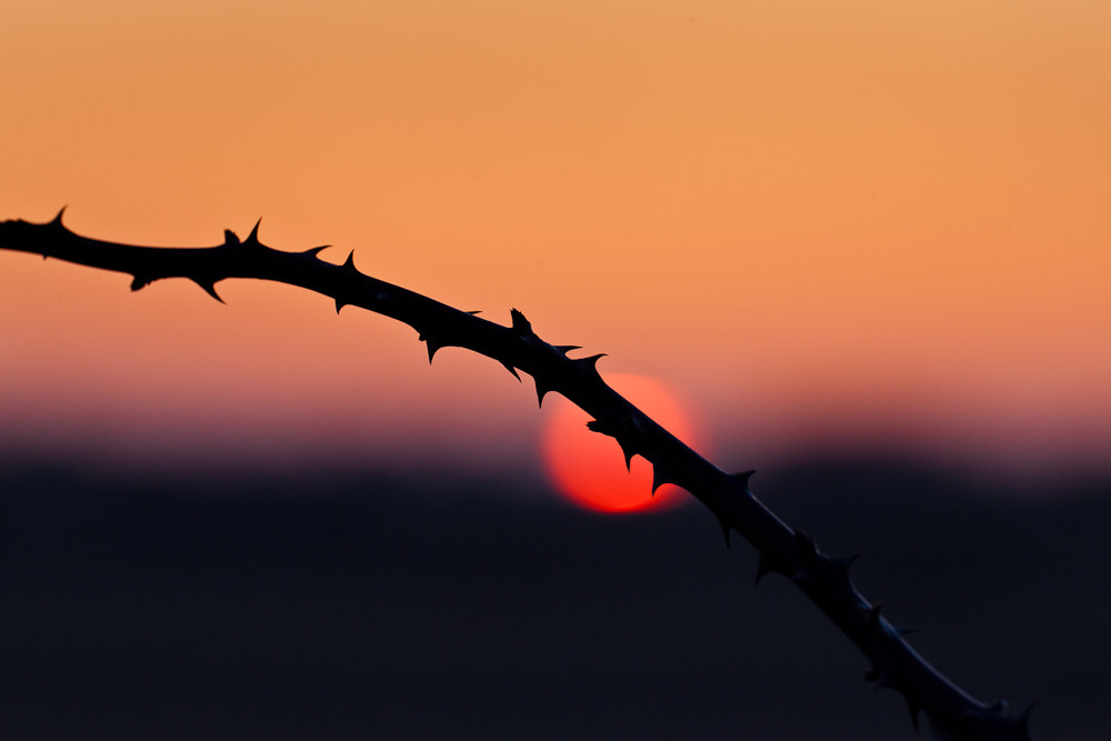 Photograph Bloody Sundown by Steffen Göthling on 500px
