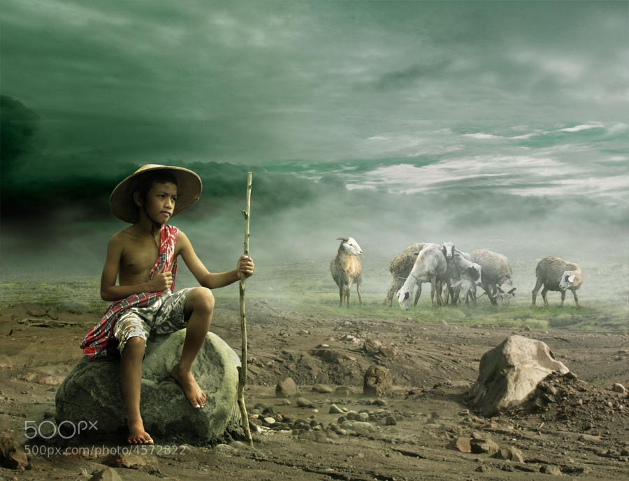 Photograph sheep herder by budi 'ccline' on 500px