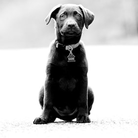 Sadie by Derek Griggs (DerekGriggs)) on 500px.com