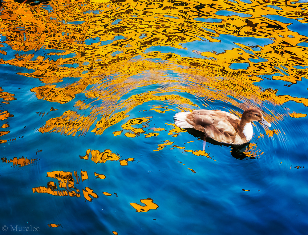 Photograph Gold in water by Muralee Raghavan on 500px