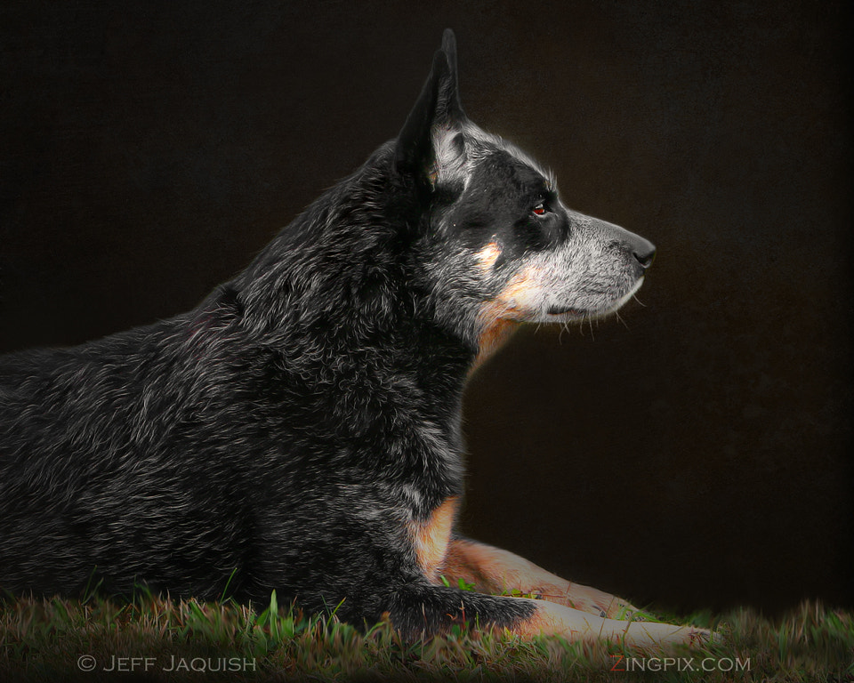 Photograph This Man's Best Friend by Jeff Jaquish on 500px