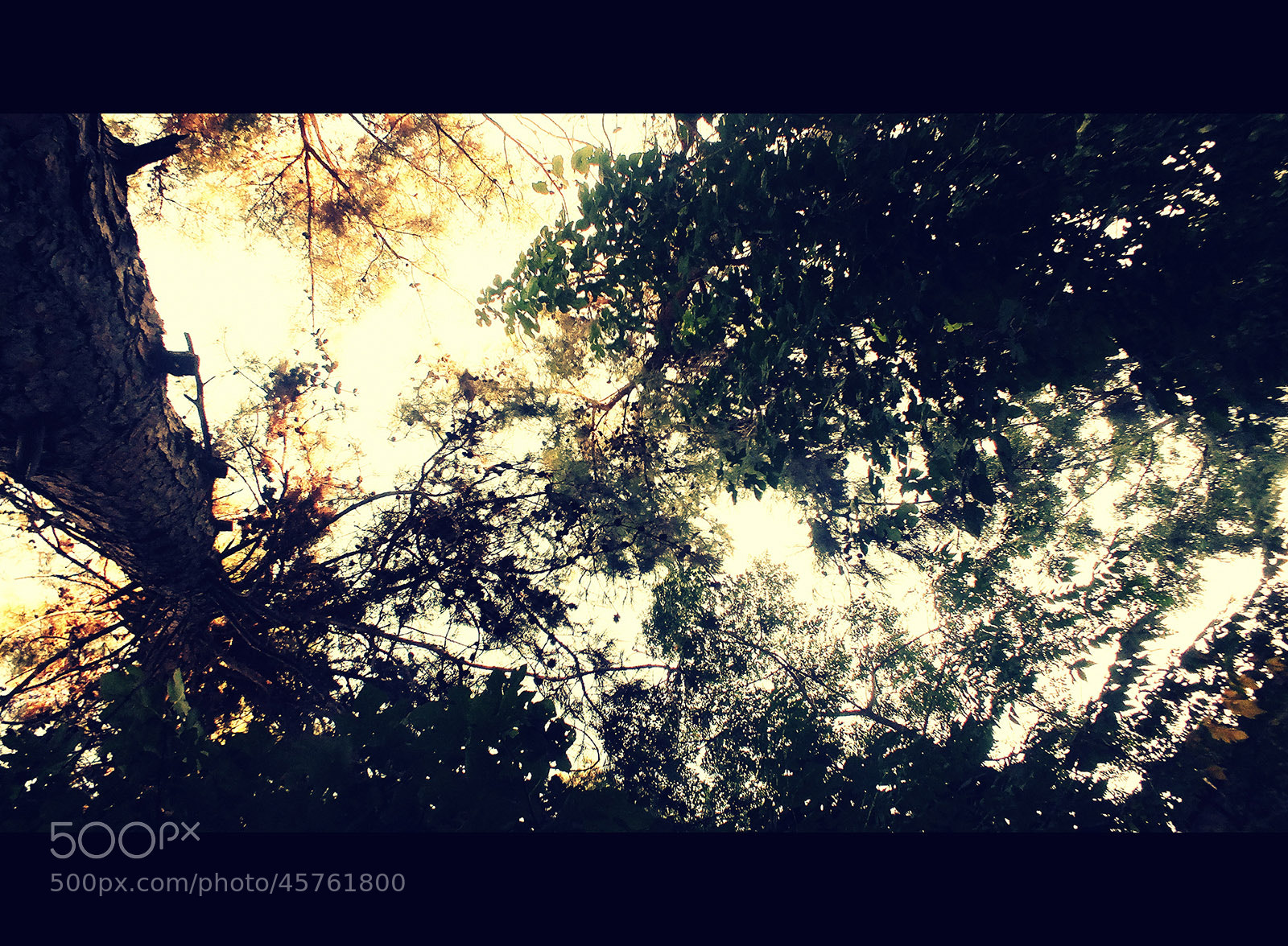 Photograph Autumn by Özlem Canik on 500px