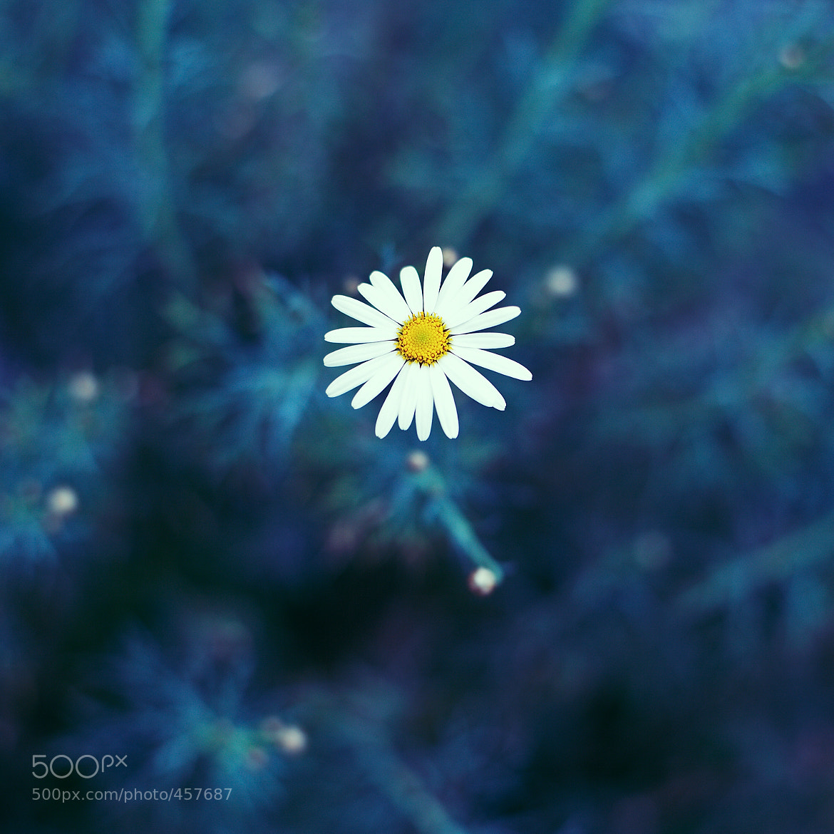 Photograph _untitled by marco|g  on 500px