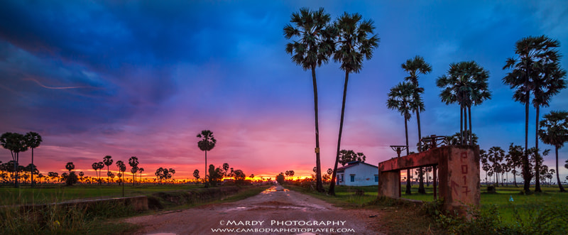 Photograph Palm tree with sunset! by Mardy Suong Photography on 500px